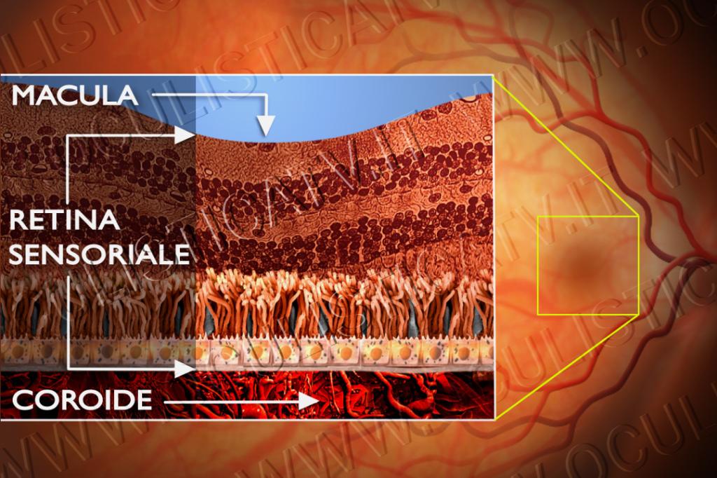 la retina 2