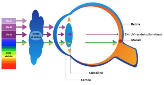 retin